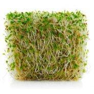 Sprouting Alfalfa Seeds (Organic) - 500g & 1kg