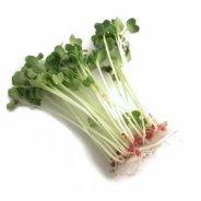 Sprouting Daikon Radish Seeds (Organic) - 500g & 1kg