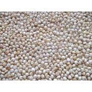Sorghum Grain (Organic, Bulk) - 25kg