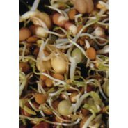 Sprouting Stir Fry Combo Seeds (Organic) - 500g & 1kg